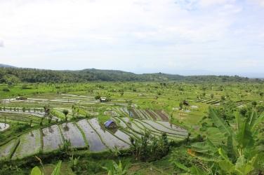 Rizieres de Tirtagangga