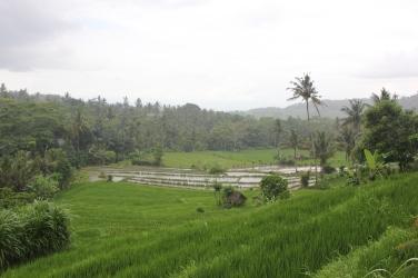 Ballade dans les rizières