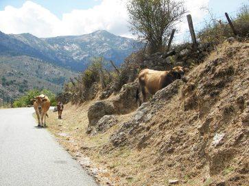 Route en allant vers Partinello