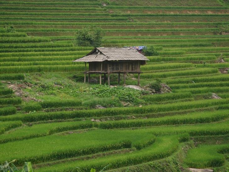 Than Uyen - vallée rizicoles des Thaïs